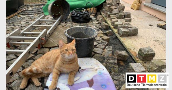 Basil in der Kanalisation