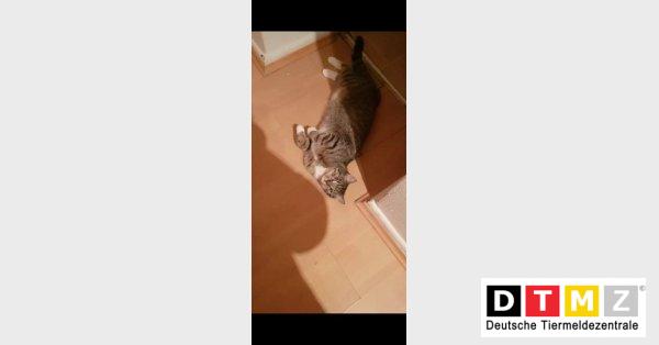 Katze Lilly wieder da