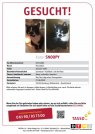 Kater Snoopy vermisst in 22529 Hamburg