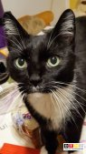Kater Speedy vermisst in 04827 Machern