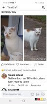 Kater Toby vermisst in 46240 Bottrop/Boy