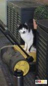 Katze Rommel vermisst in 59505 Bad Sassendorf