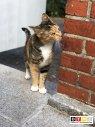 Katze Milli vermisst in 22559 Hamburg