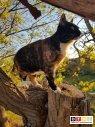 Katze Lilly vermisst in 38300 Wolfenbüttel