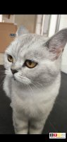 Katze Luna vermisst in 33758 Schloß Holte- Stukenbrock