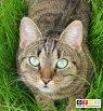 Katze Kira vermisst in 55459 Grolsheim