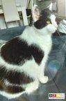 Katze Luna vermisst in 32049 Herford - Jahnstr/ Ecke Mindener Str.-Lübbertor / Visionstraße / Schützenhof u. Umgebung