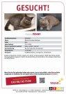 Katze Penny vermisst in 67280 Ebertsheim