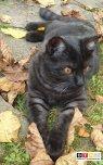 Katze Josie vermisst in 86949 Windach