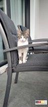 Katze Lucy vermisst in 99438 Bad Berka, Johann-Scholz-Str.